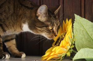 Prenez soin de vos animaux avec la phytothérapie