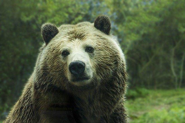 Un pyjama combinaison ours